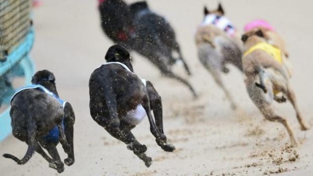 Article image for NSW backflips on greyhound racing ban