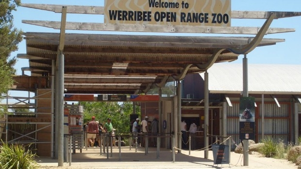 Article image for Zoos Victoria 'devastated' over accidental animal deaths, reviews practices