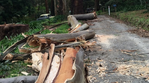 Article image for More than 4000 homes and business still without power after wild winds