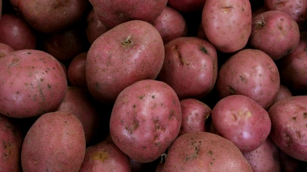 Article image for Washed out: Victoria's spud season in doubt