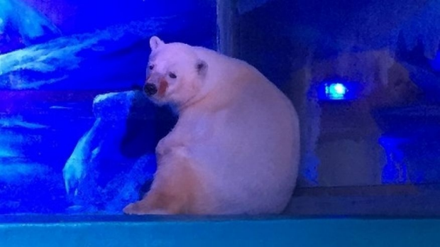 Article image for Petition to release polar bear living in Chinese shopping centre