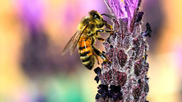 Article image for Bees are a bigger public threat than snakes, spiders, and jellyfish