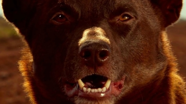 Article image for DOG MAN: Interview with Red Dog director Kriv Stenders
