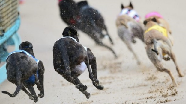 Article image for Ross and John get a laugh out of an amusingly named greyhound!