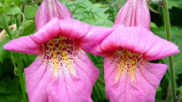 Article image for Plant of the Week