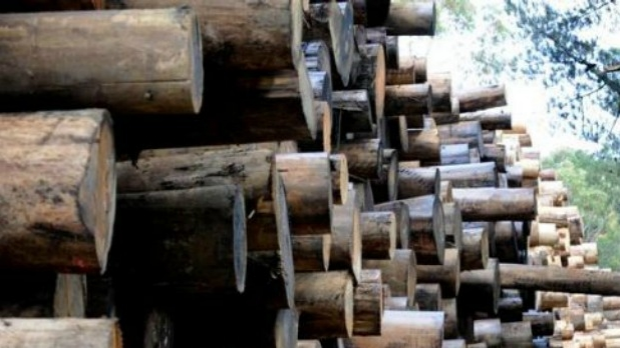 Article image for Ricky Muir calls on Victorian Government to 'look outside' Melbourne, as Heyfield braces for sawmill closure