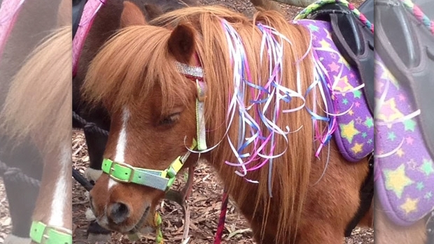 Article image for Party pony causes spat with Maroondah council