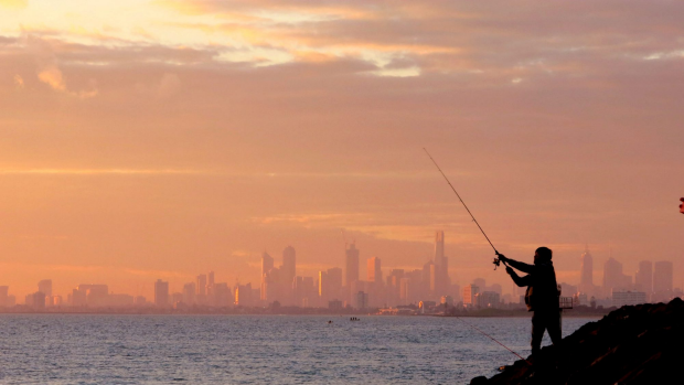 Article image for Port Phillip Bay has an extra 400-500 tonne of fish for recreational fisherman