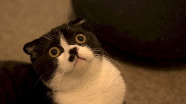 Article image for A new US study has officially busted the myth that cats don't like people