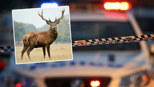 Article image for RUMOUR CONFIRMED: Deer smashes into Alphington house and causes chaos