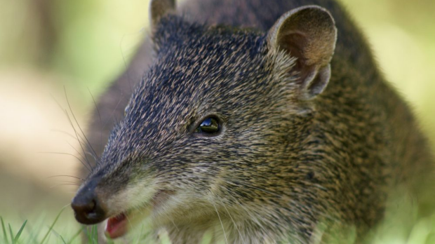 Article image for Animal rights group criticise Threatened Species Commissioner's proposal to allow Australians to keep native animals