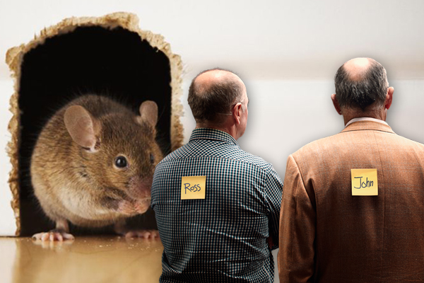 Article image for Mice plague: Ross had a mouse in the house, and they're city-bound
