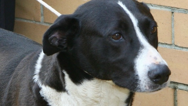 Article image for RSPCA releases list of worst animal offenders
