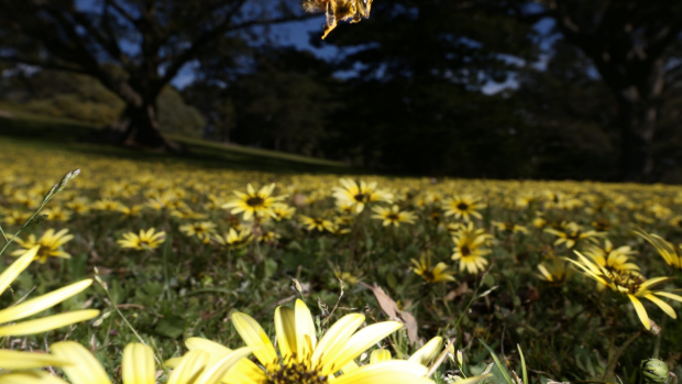 Article image for Something in the air? Melbourne's hay fever season tipped to be bad this spring