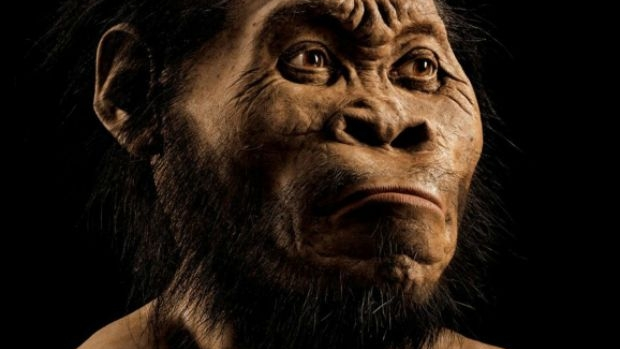 Article image for Scientists 'stumped' by discovery of human-like species in South African caves