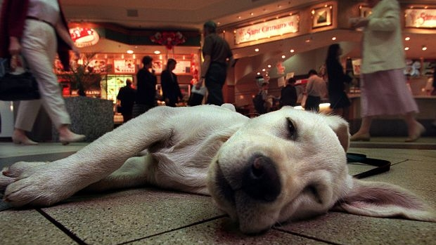 Article image for Laura Vissaritis encourages sleeping near your dog