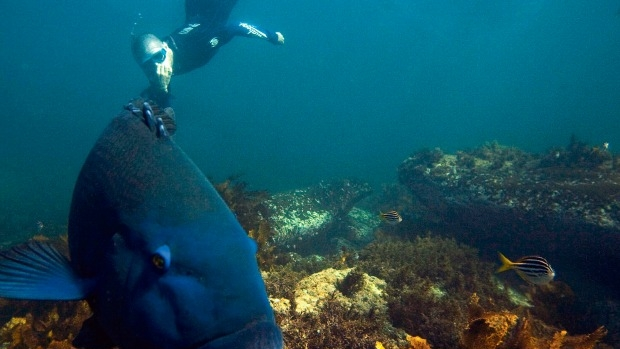Article image for Rex Hunt says Port Phillip Bay netting ban will work