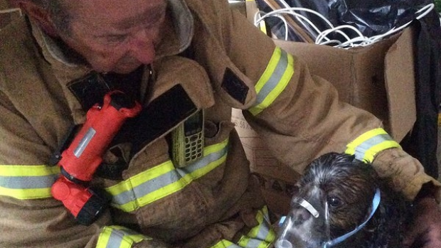 Article image for Firefighters use oxygen to save pet dog from burning house