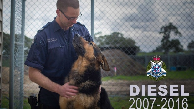 Article image for Beloved police dog Diesel dies