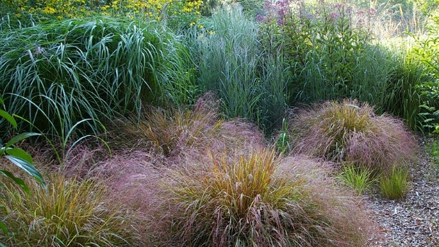 Article image for Workshop: grasses and their lookalikes