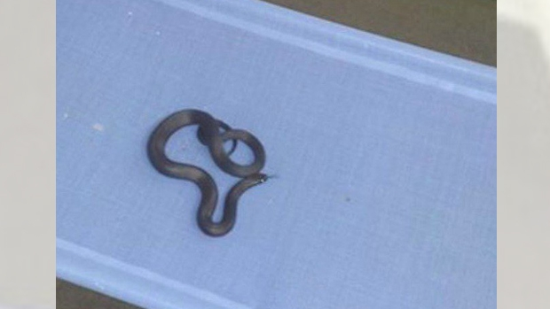 Article image for Snake-catcher Barry tells Ross and John about his nasty cot catch