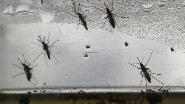 Article image for Pregnant Victorian woman diagnosed with Zika virus