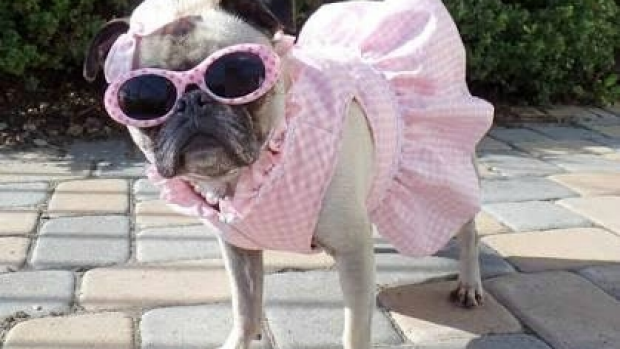 Article image for Neil Mitchell listeners send in pictures of dogs dressed up