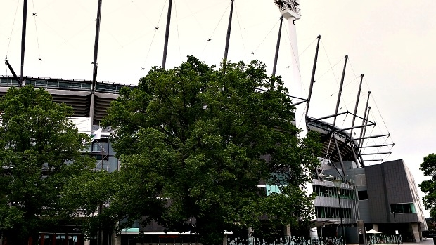 Article image for Rumour File confirmed: The MCG's new sky-high walk