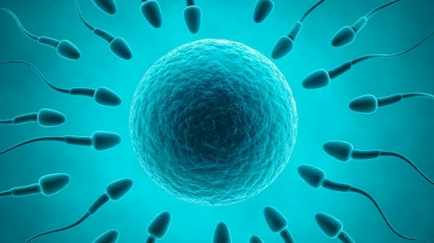 Article image for Changes to sperm donation legislation will 'stop men from donating'