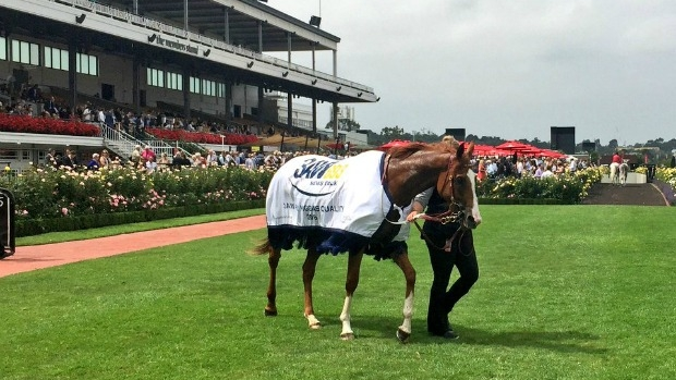 Article image for RECAP: 3AW at the 2016 Australian Guineas at Flemington