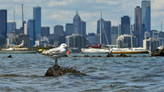 Article image for Most Port Phillip beaches 'unsuitable' for swimming this weekend