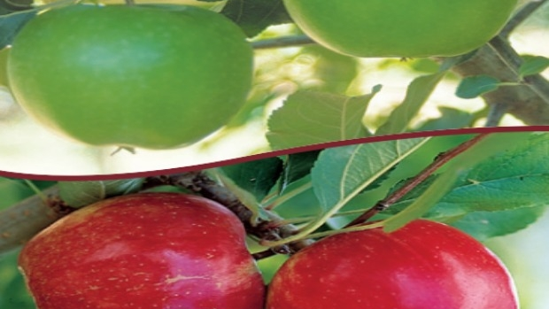 Article image for How to: plant more than one fruit tree in the same spot
