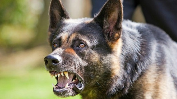 Article image for Dangerous dog laws introduced following fatal mauling could soon be overturned