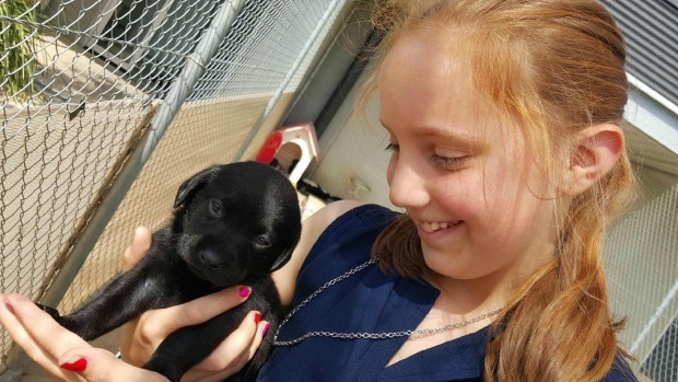 Article image for Poowong family given new dog after losing beloved labrador in fire