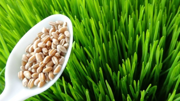 Article image for Superfood health benefits nothing more than a marketing scam