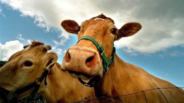 Article image for Petition to stop 'misleading' farm from slaughtering animals