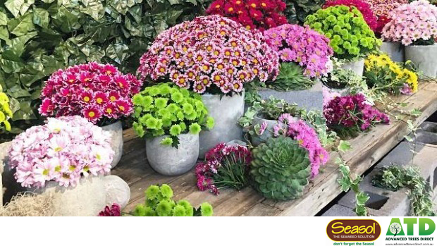 Article image for What's On: Flower and Garden Show