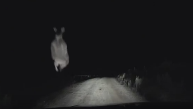 Article image for Dashcam video captures the moment a kangaroo jumps into a car windshield