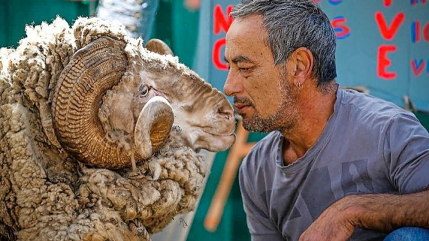 Article image for Jackie Chan the Ram is under threat from local council