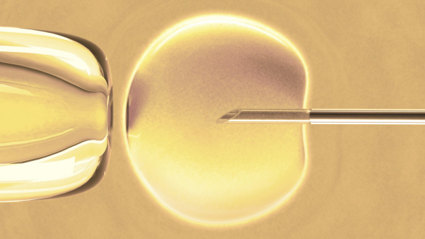 Article image for Australian researchers use new high-tech digital technique to improve IVF success