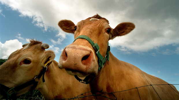 Article image for Food writer tells Ross & John the dairy industry won't survive without subsidies
