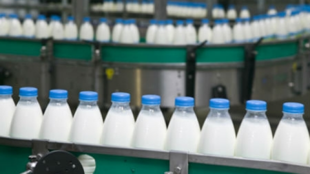 Article image for Labor and Victorian Dairy industry deliver $11.4 million for dairy farmers