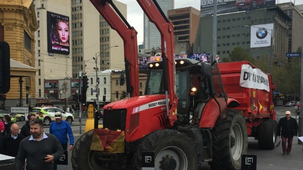 Article image for Farmers in tractors with cows in tow are protesting in the city