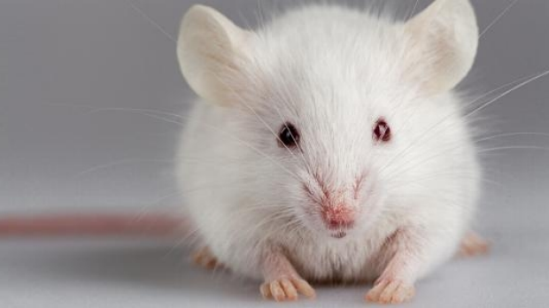 Article image for Federal Government set to make animals go without cosmetics