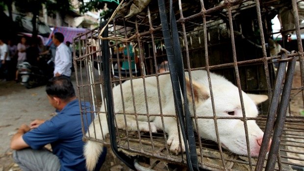 Article image for Tom Elliott explores ethics surrounding China's controversial Yulin dog meat festival