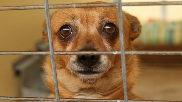 Article image for More than 100 puppies and dogs rescued after RSPCA raid at Longwood