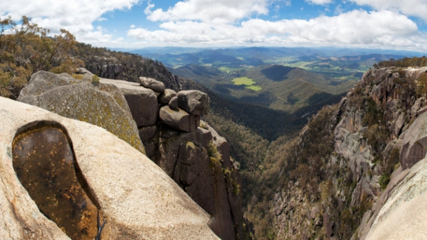 Article image for Fight erupts over dingoes on Mount Buffalo
