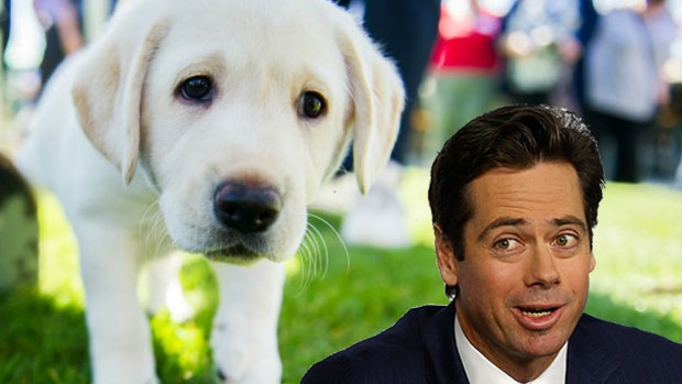 Article image for RUMOUR CONFIRMED: Gillon McLachlan reveals dogs are allowed at AFL House