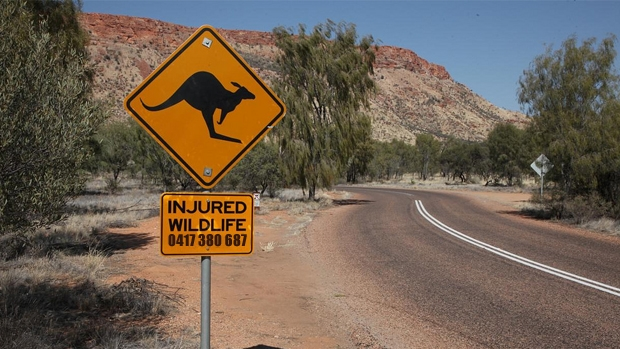 Article image for Fight for 'Help For Wildlife' hotline