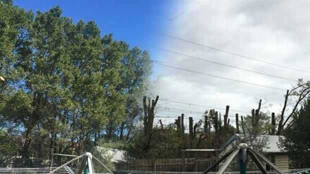 Article image for Before and after: Trees cut to make way for SkyRail